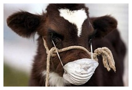 Болеют коровы