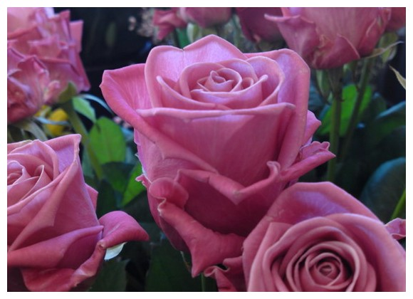 Днепродзержинск.  Чайно-гибридная роза АКВА.Выведена в Голландии.У этого сорта крупный бутон, до 12 см в...